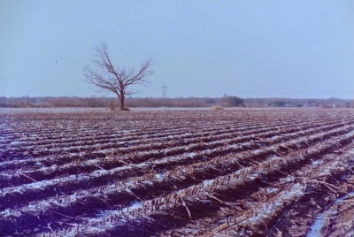 snow after the harvest (thank goodness), winter '89