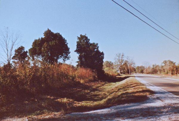 Pecan tree corner
