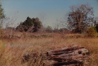 Railroad ties, looking back toward the bayou at the cedars that hd been in front of the house