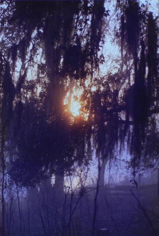dawn thru moss-draped oaks on Bayou Teche