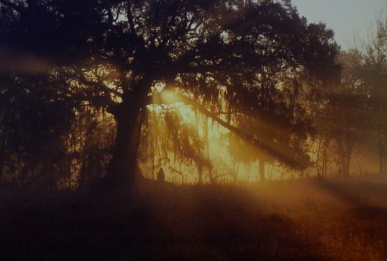 an old oak on Bayou Teche at dawn