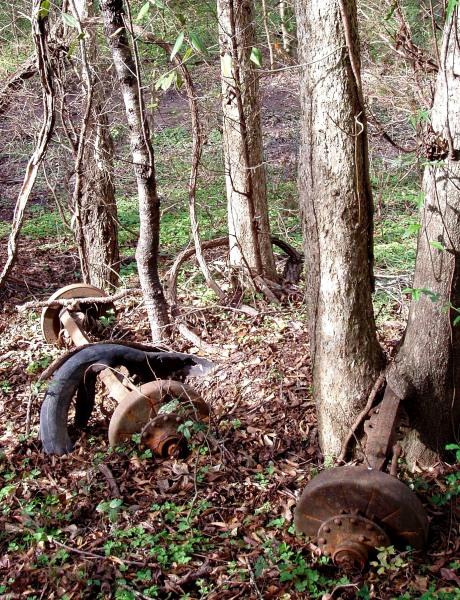 remains of a sugar cane wagon, axle and wheel rim, Cajun sugar cane farm in 1800s Breaux BridgeWagon wheel rim, in a cluster of trees on the ridge
